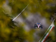 Racing Point explains call that cost Perez podium spot