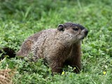 Why F1 can't stop groundhogs getting on Canadian GP track Montreal